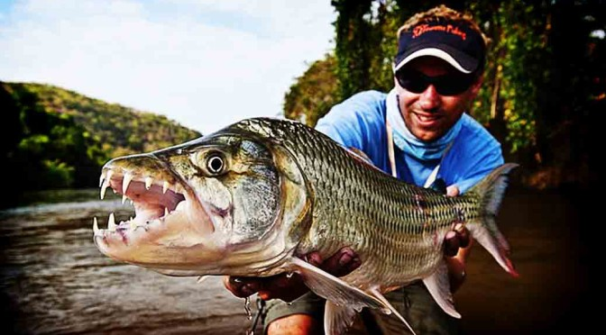 Tiger fish jumps out of water and catches flying birds for Tiger fish pictures