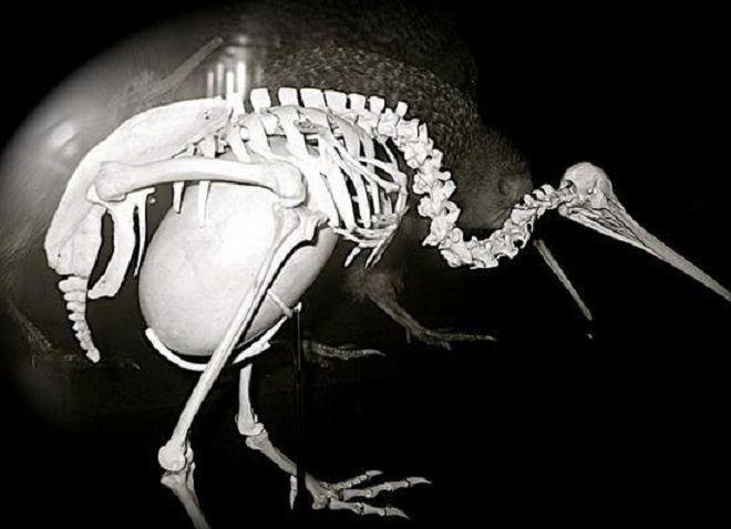 Bird egg anatomy